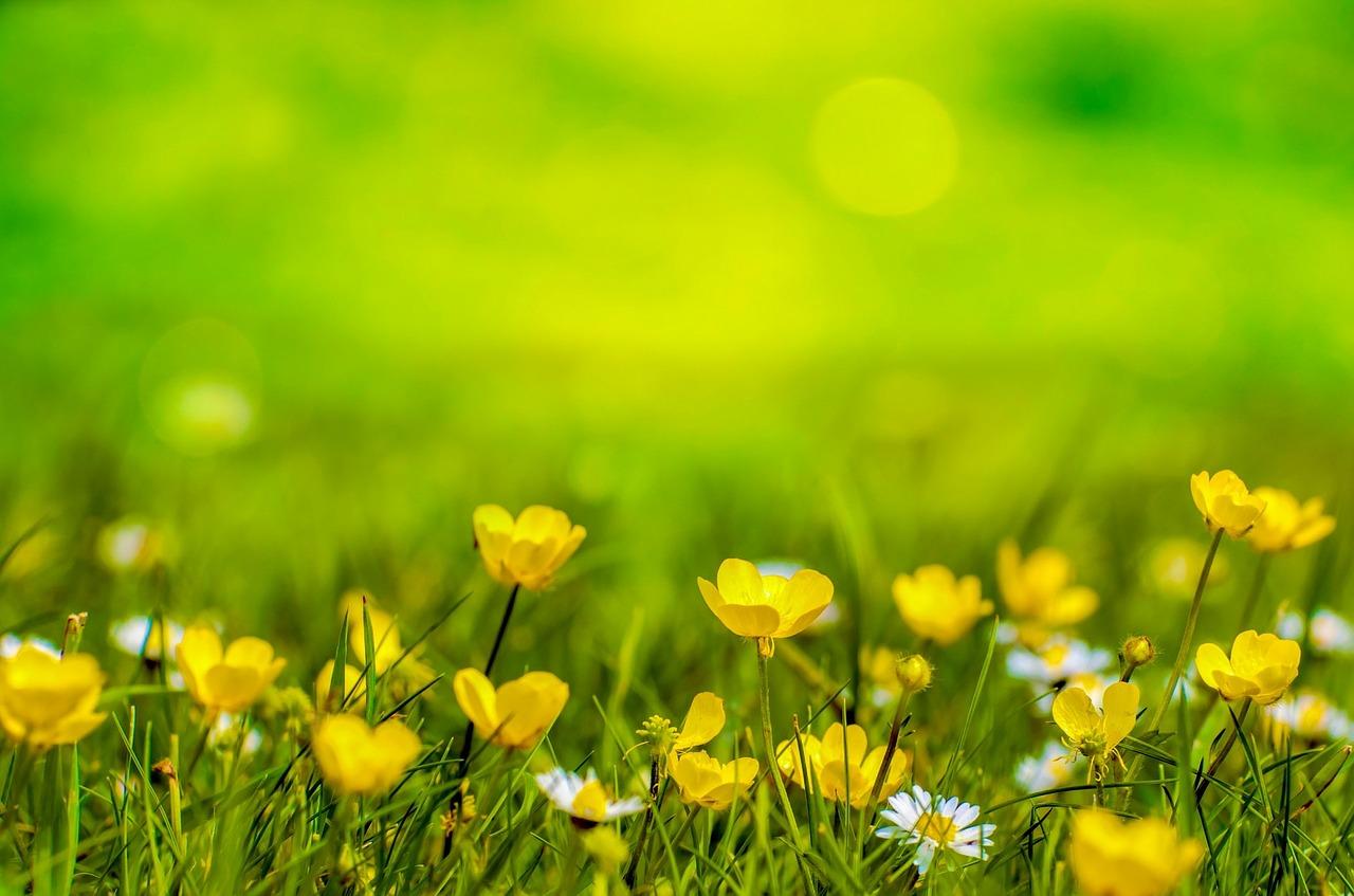 Żagiel przeciwsłoneczny nie tylko do ogrodu